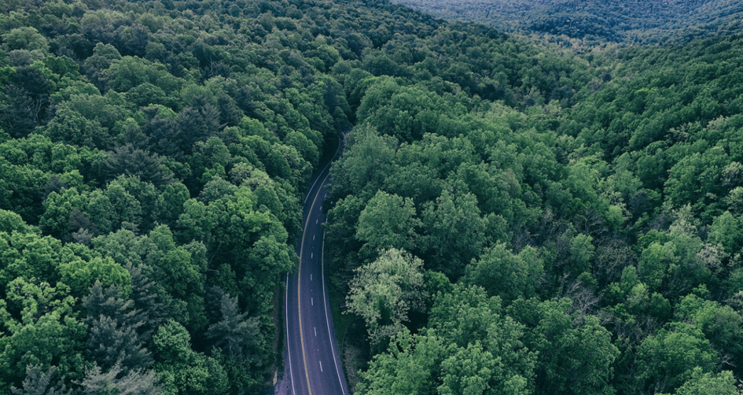 view from above of a road with forests either side