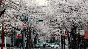 a street with cherry blossom in Kyoto, Japan
