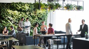 group of people working in an office in front of a vertical green living wall with lights hanging from the ceiling