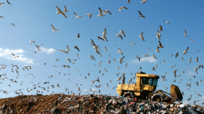 Waste tip and birds flying